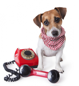 dog-phone1-275x300