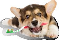 dog3-home